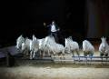 33e salon Cheval Passion ©droits g?r?s