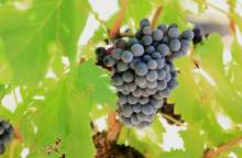 Weingut Philippe Plantevin