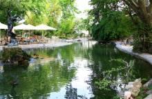 Doms Garden
