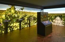 Wine Museum - Brotte