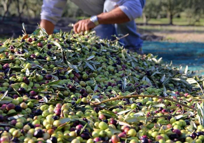 Moulin à Huile & Domaine Bastide du Laval