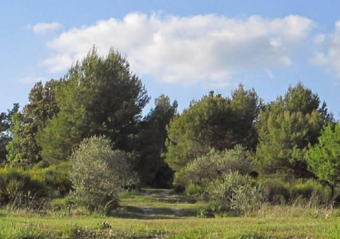 Roumavagi Farm Campsite