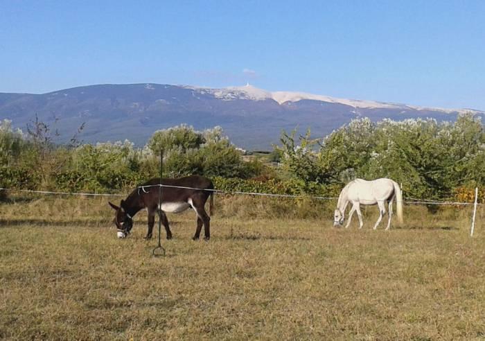 Camping à la Ferme de l'Aube