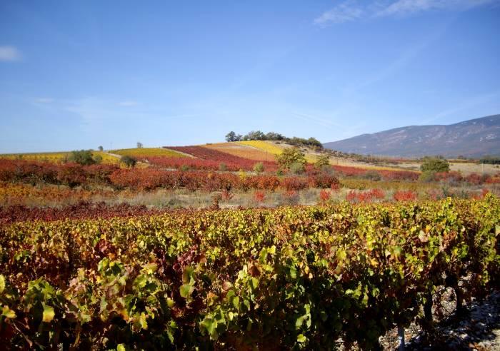 Route des Vins - Le Piémont du Ventoux
