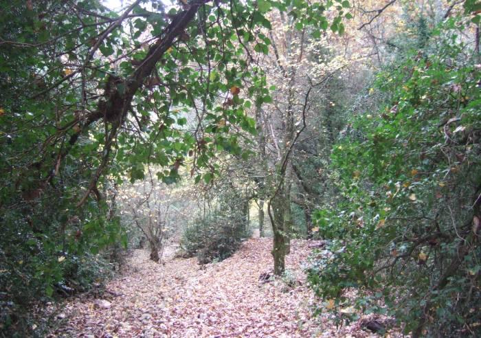 Petit Defend and Peregrine sensitive natural site