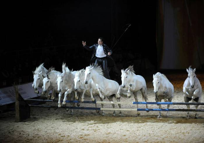 Salon Cheval Passion 32e édition