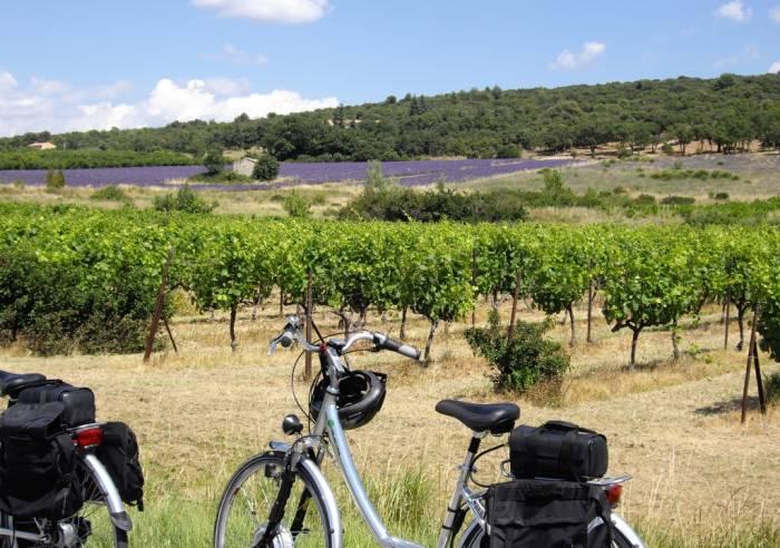 Circuit vélo : les Terrasses du Ventoux
