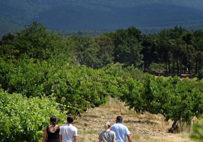 Balade vigneronne à la cave des Vignerons du Mont Ventoux