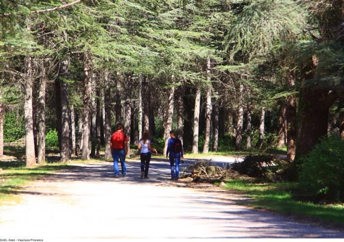 Sentier découverte de la forêt des cèdres