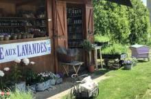La Ferme aux Lavandes et son Jardin Conservatoire de la Lavande