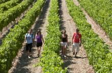Wijnkelder van Beaumont du Ventoux
