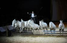 Cheval Passion, 35th year – Equestrian Festival