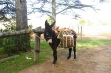 Les Oreilles du Luberon - Randonnée avec un âne