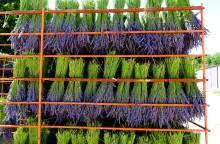 Visit the lavender farm of Champelle