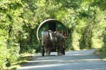 Vaucluse Ventoux Roulotte - Tourisme Equestre