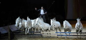 34e salon Cheval Passion-Avignon