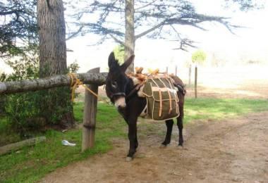 Les Oreilles du Luberon - Randonnée avec ...