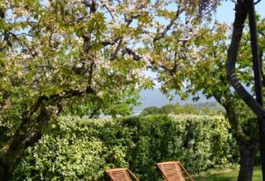 Les Cerisiers - Domaine des Finets