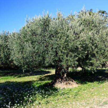 Olive Mill Itinerary – The Old Château Mill