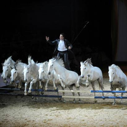 Cheval Passion, 36th year – Equestrian Festival