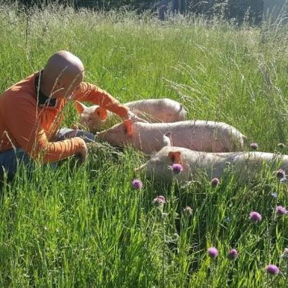 Visit a pig farming outdoors