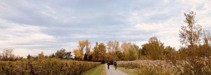 Circuit Vélo - Entre vignobles et Paysage