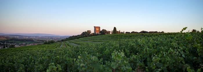 1 - Du vignoble de Châteauneuf-du-Pape à la plaine de l'Ouvèze