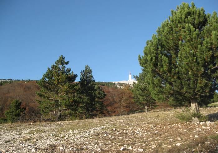 Mont-Ventoux, Biosphere Reserve