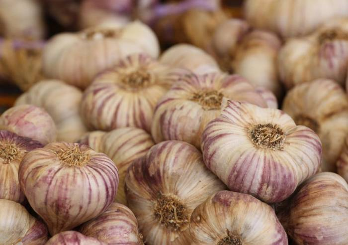 The Garlic Festival