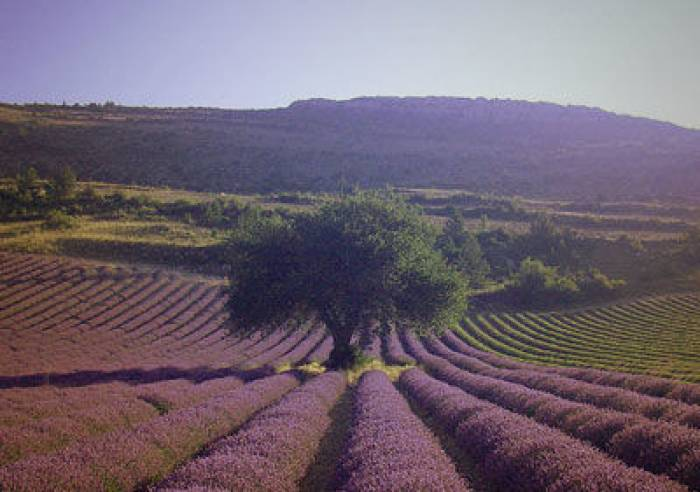 Road trip en Provence