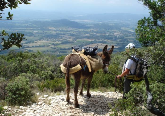Anes et Balades en Luberon