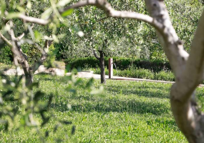 Bambouseraie à Vaison-la-Romaine