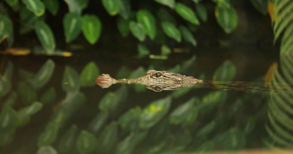 La ferme aux crocodiles@Ferme aux crocos
