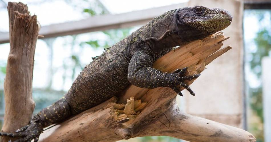 La ferme aux crocodiles@