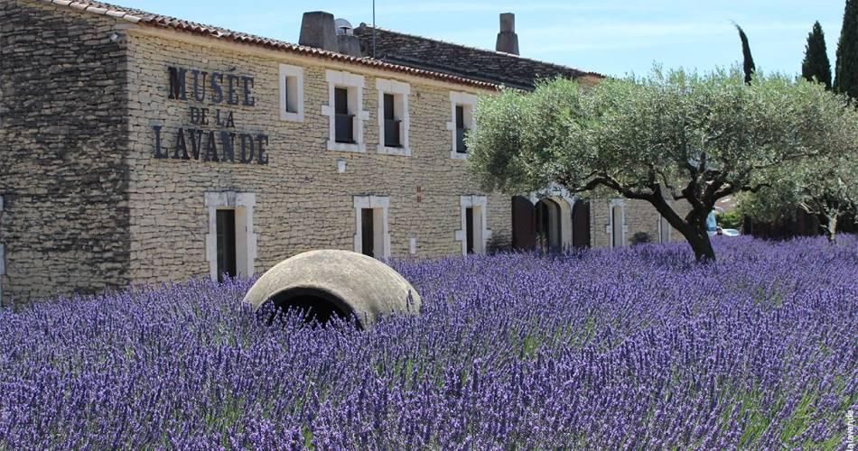 Musée de la Lavande Luberon@©museedelalavande
