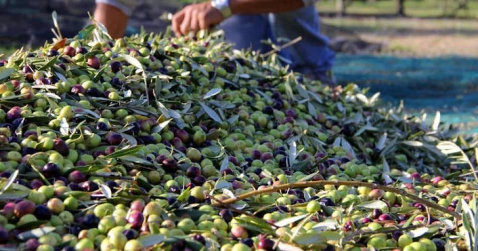 Bastide du Laval Estate & Oil Mill@Bastide du Laval