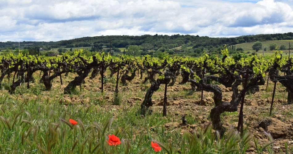 Provence Rêverie@Provence Rêverie