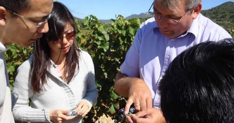 Wine Safari@Wine Safari