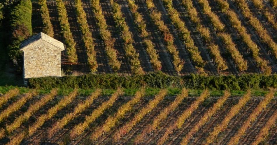 Wine Safari@Droits gérés Dignac Benoit
