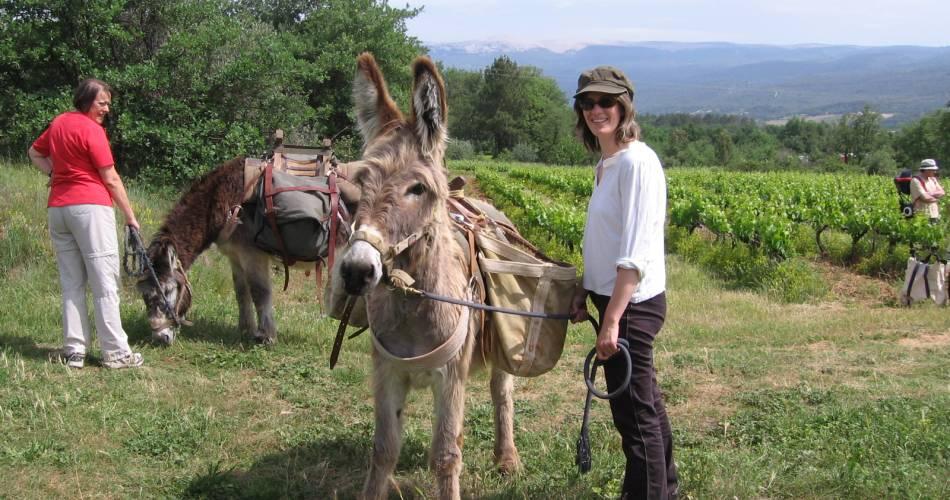Paardrijcircuit - Malaucène@Droits libres