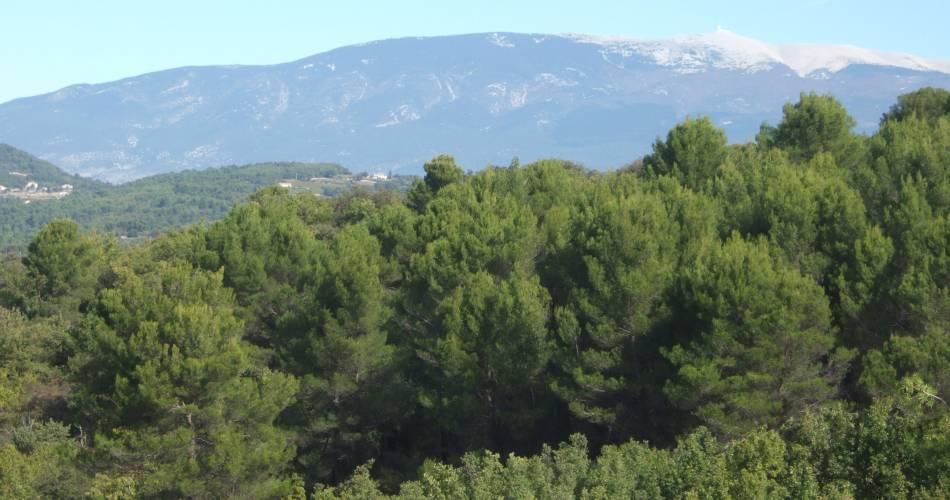 Discovery Trail at the Petit Défend and Pérégrine Protected Natural Sites@Droits gérés CG84