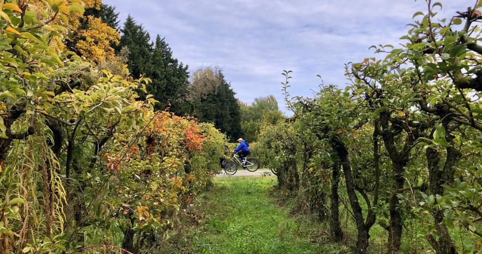12 - Entre vignobles et vergers@Isle sur la Sorgue Tourisme