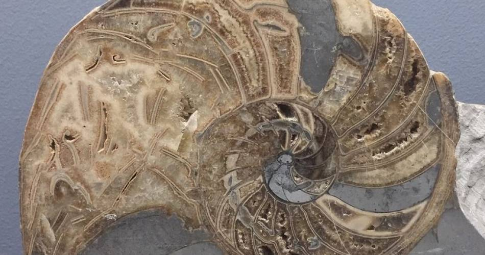 Requien Museum –  Natural History Museum@Libres