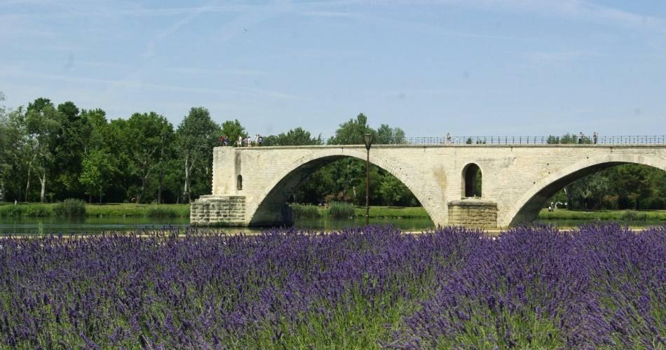 Pont d'Avignon (Saint-Bénezet)@Droits gérés Damien Falco