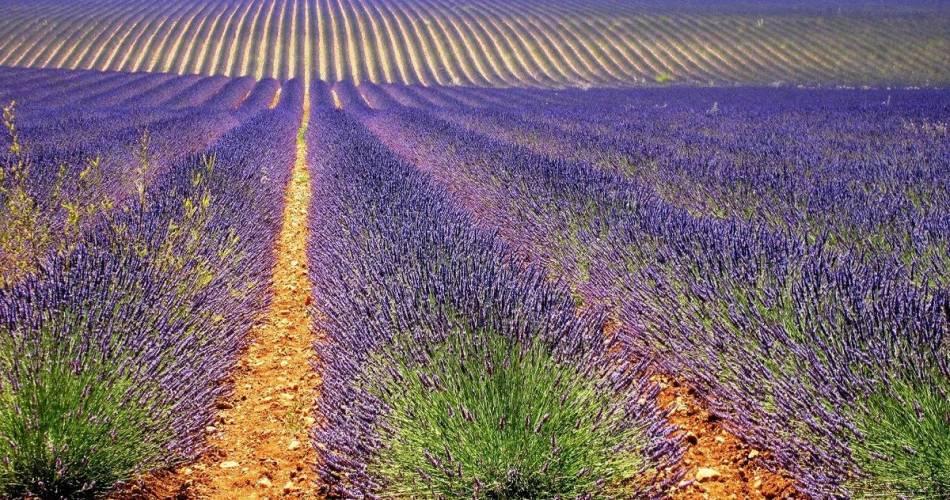 A la Française ! Provence@©otcassis