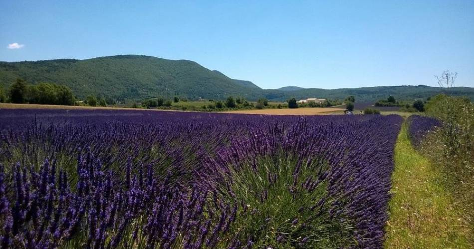 A la Française ! Provence@©nathaliesmith