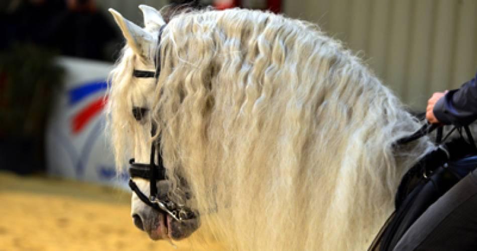 Cheval Passion - 36e édition@Droits gérés J. Rey - Salon ; Equestre ; gala ; spectacle ; cheval