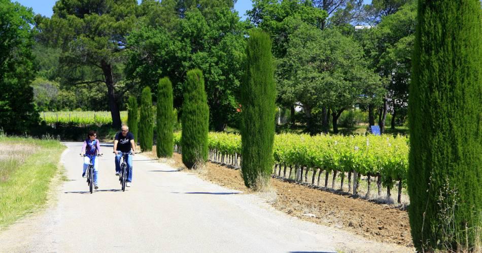 Uchaux botanical trail@HOCQUEL Alain - Vaucluse Provence
