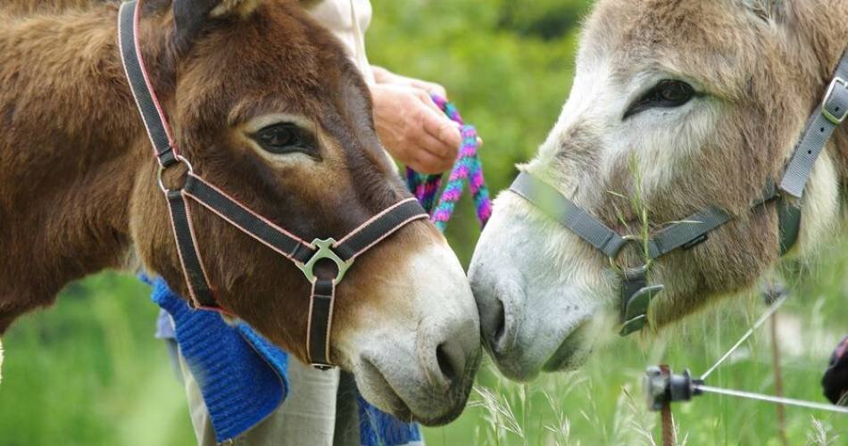 Walking with donkeys in the Luberon@Droits gérés Netta Müller