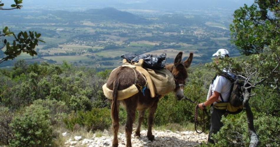 Walking with donkeys in the Luberon@Droits Gérés Netta